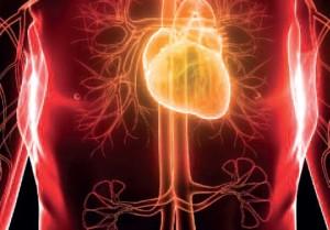 Microelementele nutritive pot ajuta în cazul riscului multiplu de boli cardiovasculare