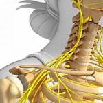 Microelementele nutritive, necesare pentru un schelet sănătos