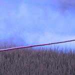 Pesticidele obişnuite, asociate cu un risc crescut de mortalitate