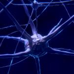 Combinaţiile sinergice de antioxidanţi pot preveni şi inversa cursul bolii Alzheimer