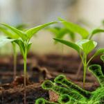 Cum se poate lupta împotriva Covid-19 cu ajutorul componentelor din plante