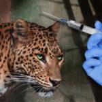 Vaccinarea animalelor împotriva COVID-19: cât mai permit oamenii să fie prostiți?